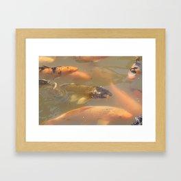 Carp fish Framed Art Print