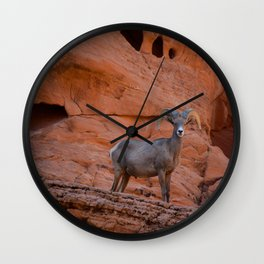 Desert Bighorn - Valley of Fire Wall Clock
