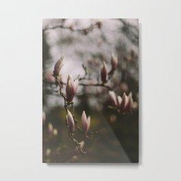 Magnolias Metal Print