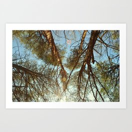The Pines  Art Print