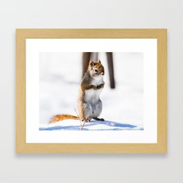 Squirrel with Cold Hands Framed Art Print