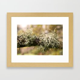 Close up of a branch with moss Framed Art Print