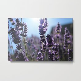 Lavender Lighting Metal Print