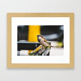 Summer Sidewalk Nature Bird. Photograph Framed Art Print