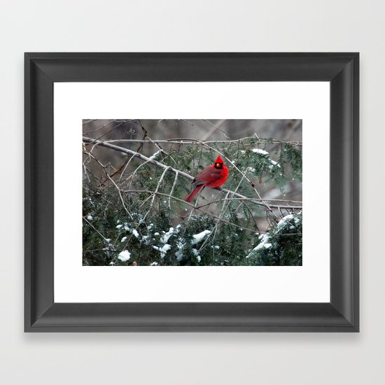 Winter Cardinal Framed Art Print