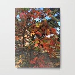 Fall color in London Metal Print