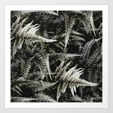 Ferns - A Pattern Art Print