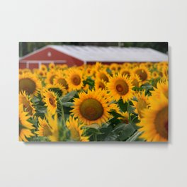 Red Barn and Sunflowers Metal Print