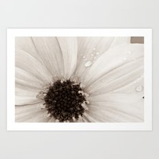 Flower with droplets Art Print