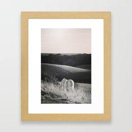 Pony Grazing Framed Art Print