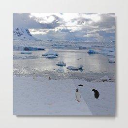 Gentoo Penguins on Ice Metal Print