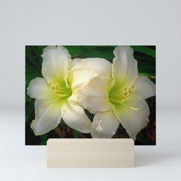 Glowing white daylily flowers - Hemerocallis Indy Seductress Mini Art Print