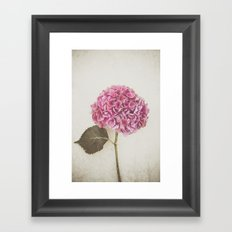 Beautiful Pink Hydrangea Framed Art Print