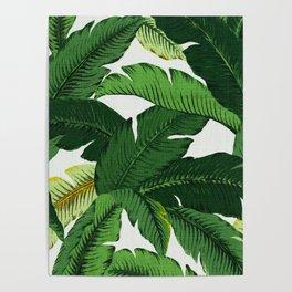 banana leaf palms Poster