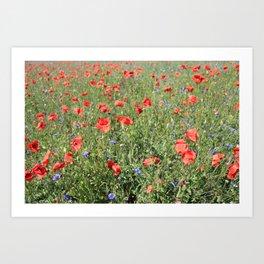 poppy flower no5 Art Print