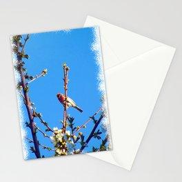 Red Canary - Good Morning - Jeronimo Rubio Photogaphy 2016 Stationery Cards