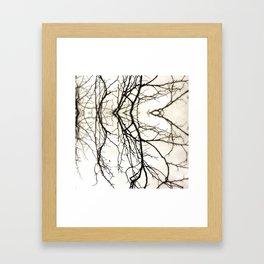 Branches #45 Framed Art Print
