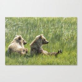 Unbearably Cute - Bear Cubs, No. 5 Canvas Print