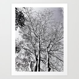 The Trees - As Old as Time Art Print