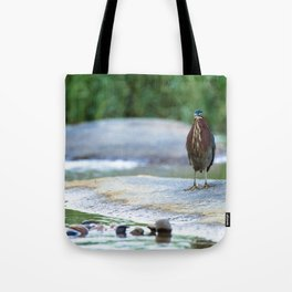 Little Green Heron Tote Bag