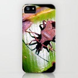 Dock Bug,Coreus marginatus iPhone Case