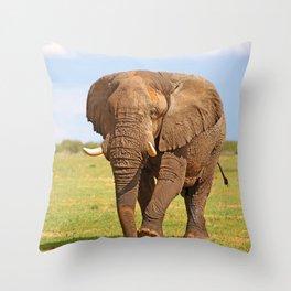 Big Elephant in Namibia Throw Pillow