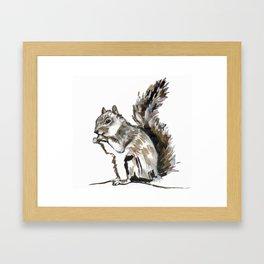 Squirrel Bournemouth Gardens Framed Art Print