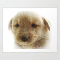 puppy Art Prints featuring Puppy by Svetlana Sewell