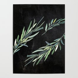 Eucalyptus leaves on chalkboard Poster