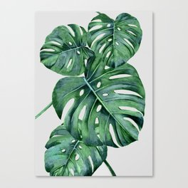 Monstera Canvas Print