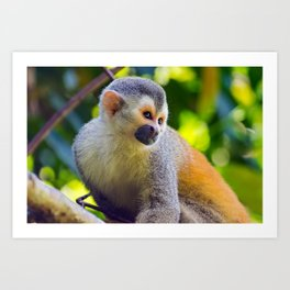 Squirrel monkey - Costa Rica Art Print