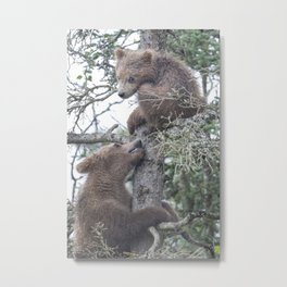 Brown Bear Cubs Metal Print