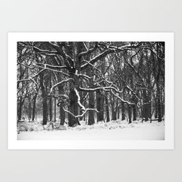 Tree in the winter (RR 272) Art Print