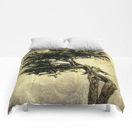 Cypress Tree Comforters