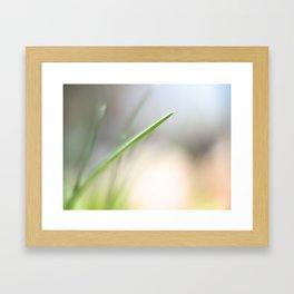 A Single Chive Framed Art Print