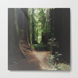 Redwood Trail Metal Print