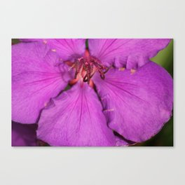 amaranthine Canvas Print