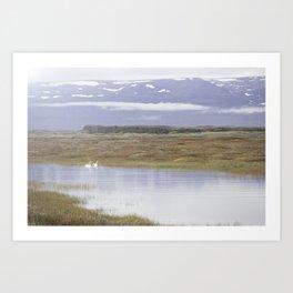 Swans of Iceland Art Print