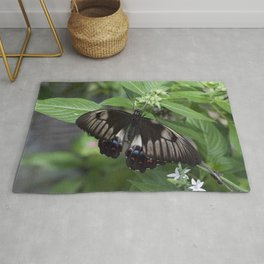 A Swallow tail Butterfly Rug
