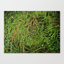 Boughs Canvas Print
