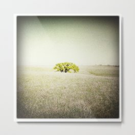 Tree, Flint Hills, Kansas Metal Print