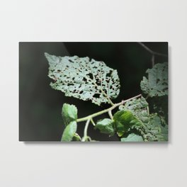 A Plant In Focus Metal Print
