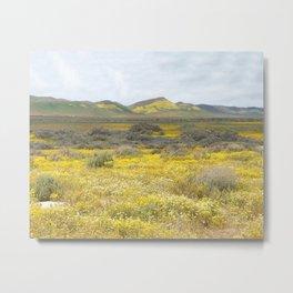 Mega Bloom Central California, Carrizo Plain National Monument Metal Print
