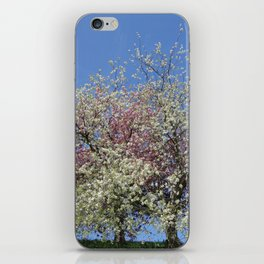 Pink and White Blossom - Blue Sky iPhone Skin