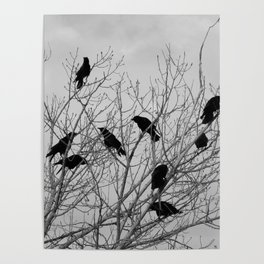 Murder Of Crows - Two Poster