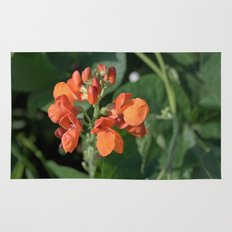 bright orange bean flowers. garden vegetable plant photography. Rug