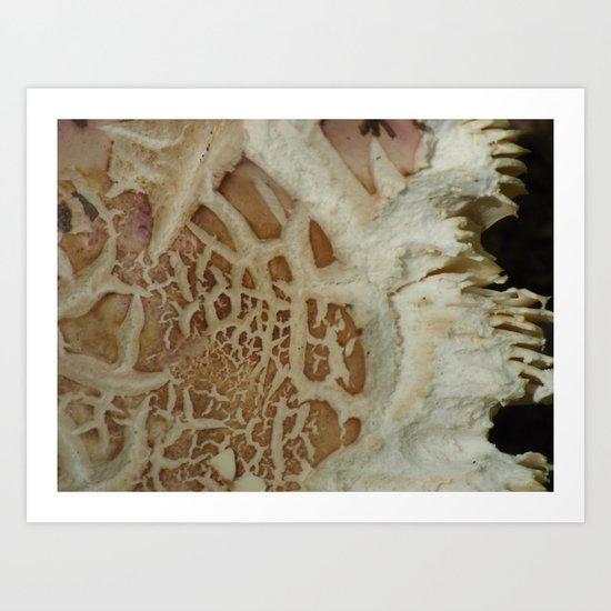 mushroom closeup 1 Art Print