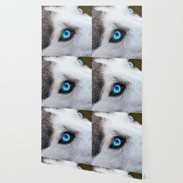 Siberian Husky Eyes (Color) Wallpaper