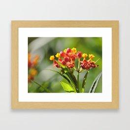 Little Spring Blooms Framed Art Print