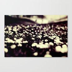 flowers field III Canvas Print